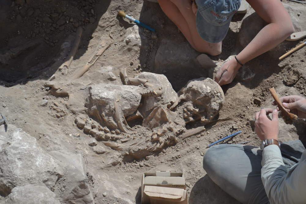 Restos de adultos encontrados justo fuera de la sala industrial en Gezer, preservados por piedras que se derrumbaron en la parte superior del cuerpo. (Foto: Instituto Tandy de Arqueología)