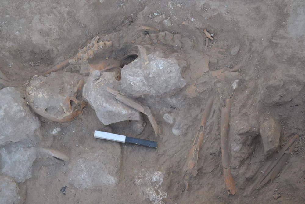 Restos de adultos encontrados justo fuera de la sala industrial en Gezer, preservados por piedras que se derrumbaron en la parte superior del cuerpo. (Foto: Tandy Institute for Archaeology)