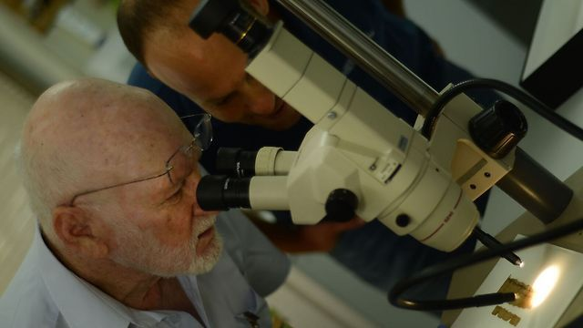 Prof. Dr. Klein Achituv examinando el papiro (Foto: Shai Halevi, cortesía de la Autoridad de Antigüedades de Israel)