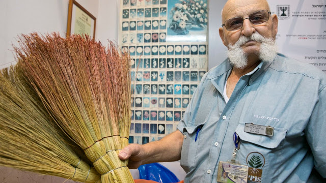 Shuki Kedmi, jefe de Protección de Plantas y Servicios de Inspección con un par de escobas confiscadas. Las escobas contienen semillas con un virus que atacan a todos los árboles de hoja ancha. [Foto: Ofer Vaknin]