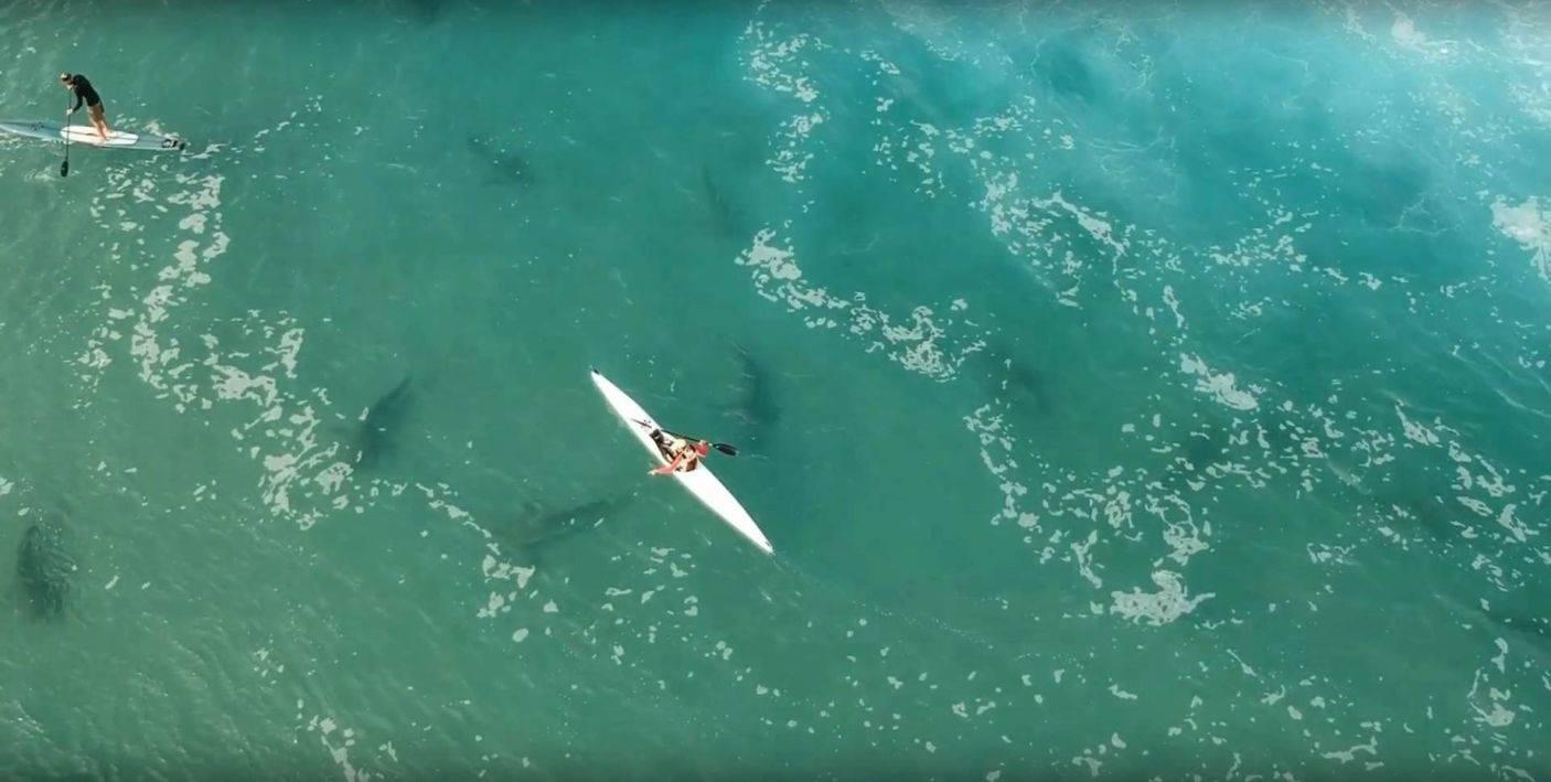 Nadar con tiburones. Los humanos son los peligrosos. Out of the Blu / Ran Golan