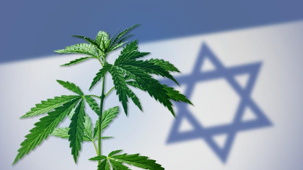 Cannabis: nuevas investigaciones israelíes