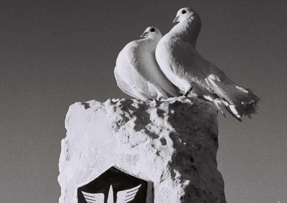 Las palomas se sientan encima de un monumento conmemorativo para palomas mensajeras militares israelíes, en la base militar de Tzrifin en el centro de Israel, en esta foto de archivo del 4 de octubre de 1950 publicada por la Oficina de Prensa del Gobierno israelí (GPO) y obtenida por Reuters el 1 de abril de 2018. REUTERS / GPO / Fritz Cohen / Archivo