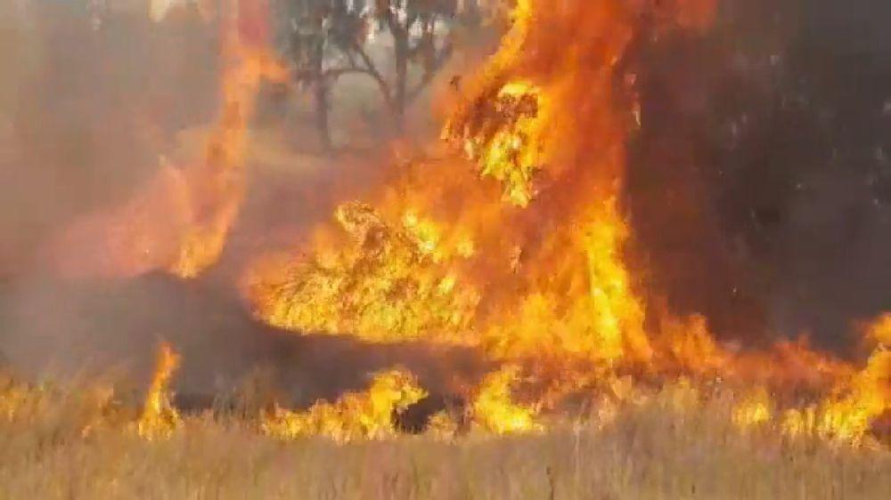 Cometa incendiaria de Gaza inicia incendio forestal en Israel