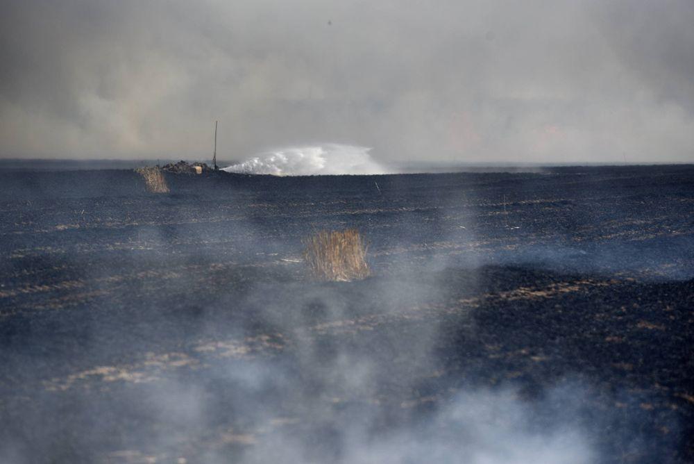 Grandes estragos en los campos de cultivo de Israel por las cometas encendidas que envían los islamistas desde Gaza. (Foto: Reuven Castro -Walla)