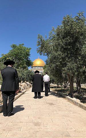Un grupo de judíos ultraortodoxos reza cerca de la Cúpula de la Roca en el Monte del Templo, el 18 de junio de 2018. Oficialmente, está prohibida la oración judía en lo alto del monte (Amanda Borschel-Dan / Times of Israel)
