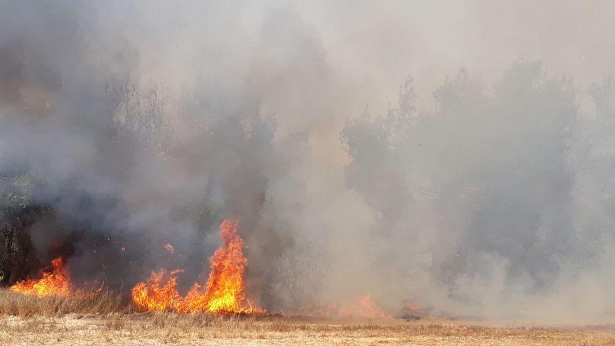 Incendio causado por cometas y globos incendiarios (Foto: Consejo Regional de Eshkol)