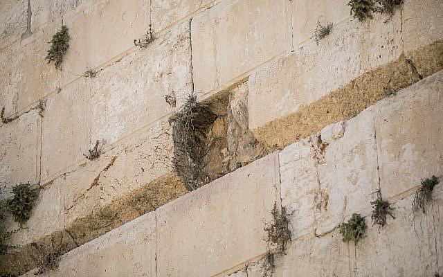 Vista del lugar donde un gran trozo de piedra se desprendió del Muro de los Lamentos en Jerusalén en la sección de oración mixta el 23 de julio de 2016. (Yonatan Sindel / Flash90)