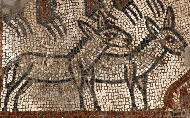 Un par de burros en la escena del Arca de Noé en la excavación de Huqoq. (Jim Haberman vía UNC-Chapel Hill)