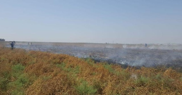Tierras de cultivo ennegrecidas en el sur de Israel de cometa incendiaria
