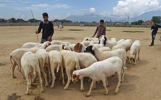 Un vendedor de ganado de Cachemira vende ovejas antes de la fiesta musulmana de Eid al-Adha en Srinagar el 17 de agosto de 2018. (AFP / Tauseef Mustafa)
