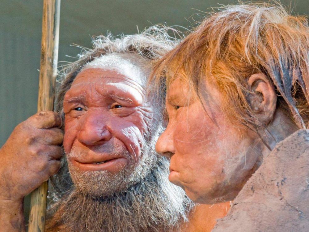 """Reconstrucciones de un hombre de Neanderthal llamado """"N"""", izquierda, y una mujer llamada """"Wilma"""", en el museo Neanderthal en Mettmann, Alemania, 2009. (Martin Meissner / AP)"""