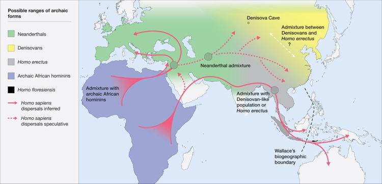 Dispersión hipotética de Neanderthal-Denisovan (Roberts y Stewart. 2018. Defin)