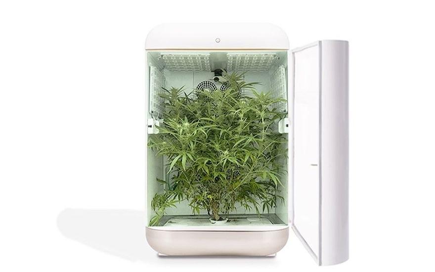 Empresas israelíes se unen para crear kits para cultivar cannabis medicinal en el hogar