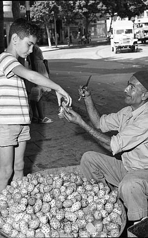 Un hombre vendiendo sabras en la calle en la década de 1950. (Efraim Ilani)