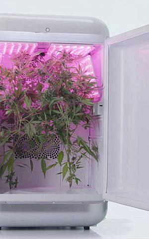 Una ilustración de la tecnología de Seedo para el cultivo automatizado de Cannabis. (Seedo)