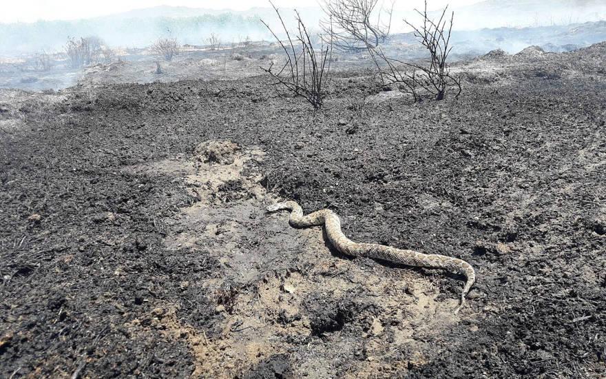 Agricultores presentarán demanda por crímenes de guerra contra Hamas por incendios