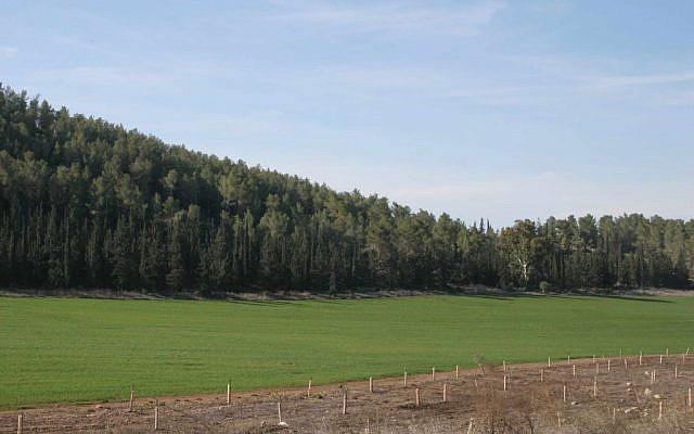 El pintoresco bosque de Maresha. (crédito de la foto: Shmuel Bar-Am)