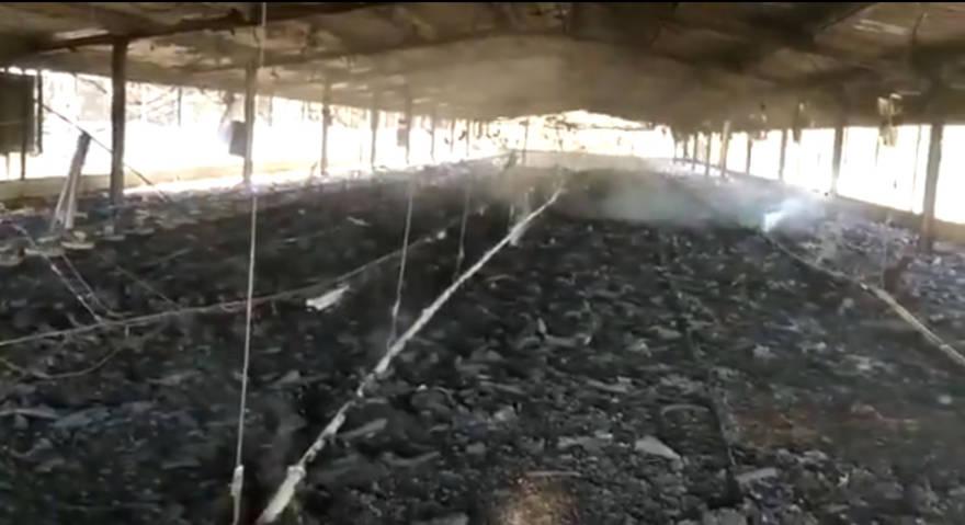 Árabes incendian miles de aves vivas en una granja israelí
