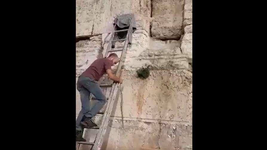 Serpiente emerge de las grietas del Muro Occidental