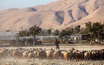 Ilustrativo Un pastor palestino en el valle del Jordán, 20 de noviembre de 2009. (Crédito de la foto: Yossi Zamir / Flash90)