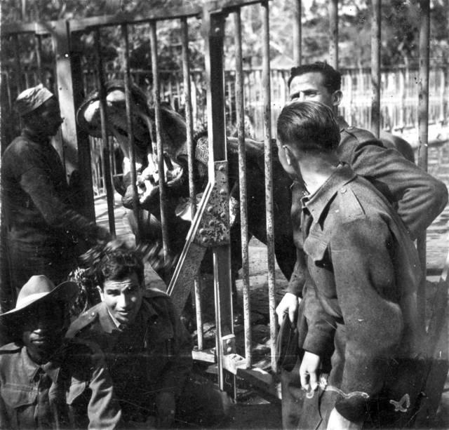 Fotografías del 'Zoo de El Cairo', 1944. Foto: Rafael Reiss, la Colección Bitmuna. Colección Bitmuna