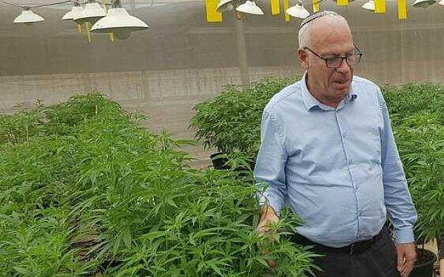 El ministro de Agricultura, Uri Ariel, recorre un invernadero que cultiva cannabis medicinal. (Cortesía)