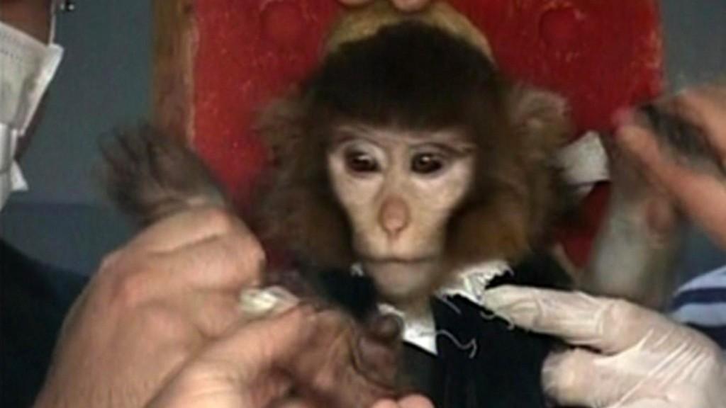 Científicos iraníes rodean a un mono antes de lanzarlo al espacio, 28 de enero de 2013 (crédito de foto: video de AP)
