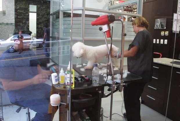 Una tienda de aseo para mascotas en un pequeño centro comercial que atrae a una clientela mayoritariamente judía.