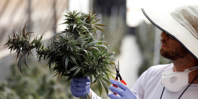 Israel establecerá incubadora de alta tecnología para el desarrollo del cannabis medicinal