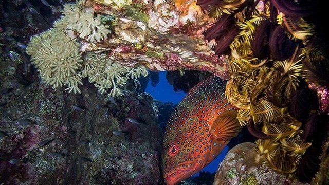 Arrecifes de coral en el Golfo de Eilat (Foto: Autoridad de Parques y Naturaleza)