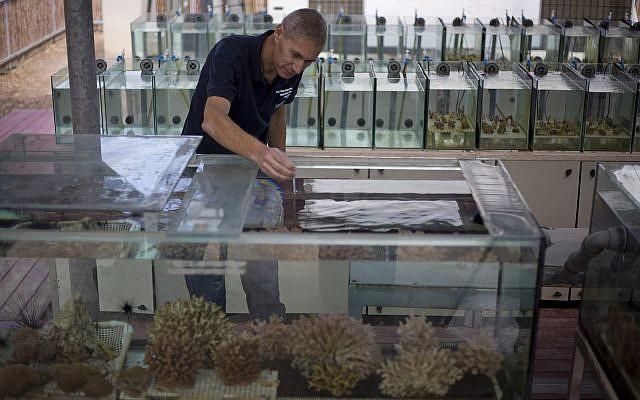 Maoz Fine, un experto en arrecifes de coral en la Universidad de Bar-Ilan, mide la temperatura del agua de los tanques tratados para simular las futuras condiciones de cambio climático en un laboratorio en la ciudad del mar Rojo de Eilat, sur de Israel, el 11 de febrero de 2019. (Ariel Schalit / AP)