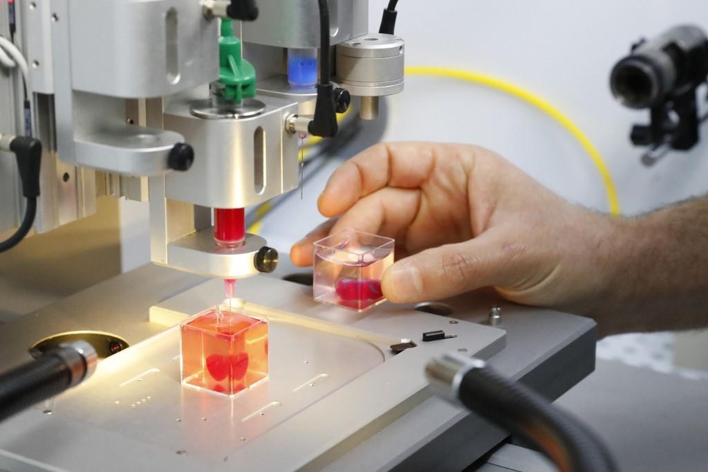 Esta foto tomada el 15 de abril de 2019 en la Universidad de Tel Aviv muestra una impresión 3D de un corazón con tejido humano.(JACK GUEZ / AFP)
