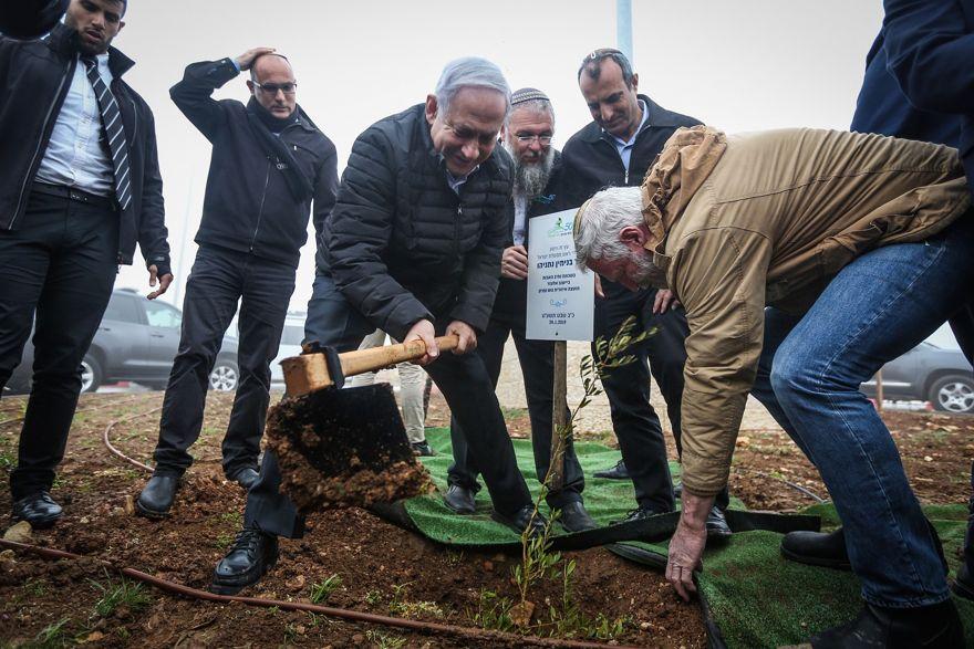 El primer ministro Benjamin Netanyahu planta un olivo en el barrio de Netiv Ha'avot en el poblado de Elazar en Judea y Samaria, el 28 de enero de 2019. (Marc Israel Sellem / Pool)