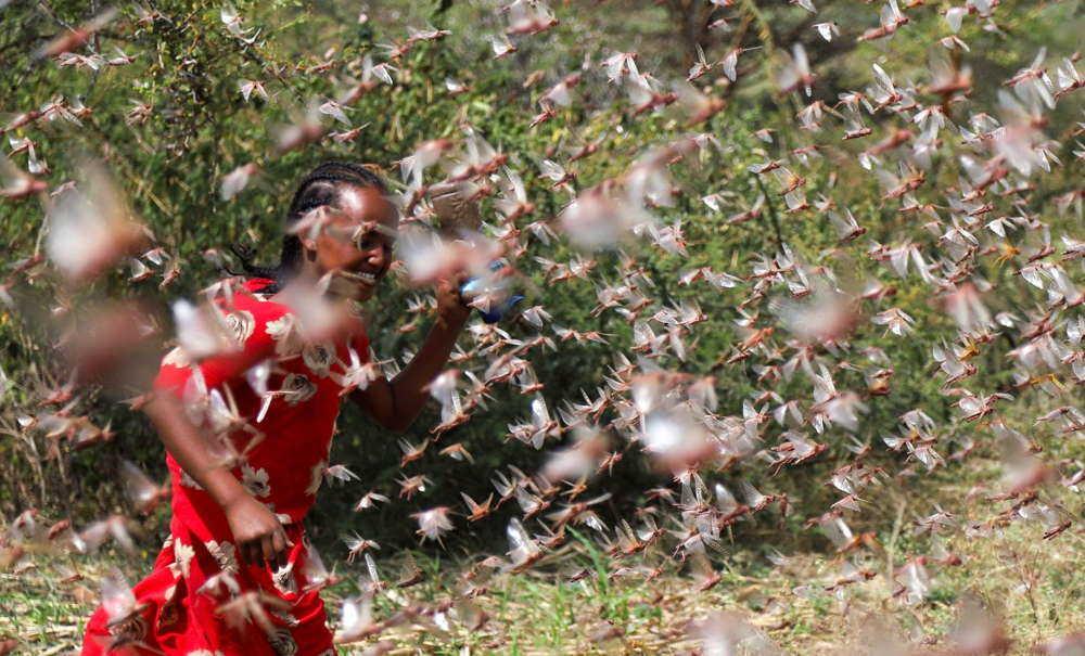 Plaga de langostas amenaza a millones de personas en África Oriental