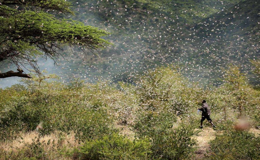 Irán planea utilizar su ejército contra la invasión de langostas que amenaza los cultivos