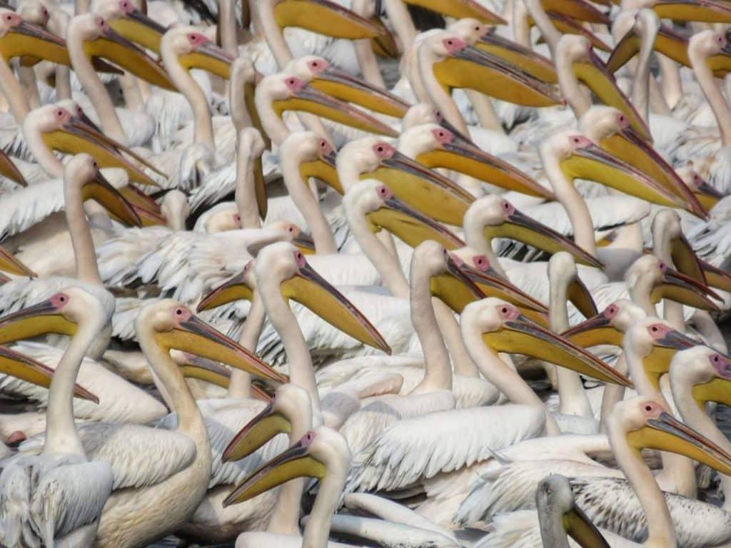 Israel se deslumbra ante impresionante migración de aves