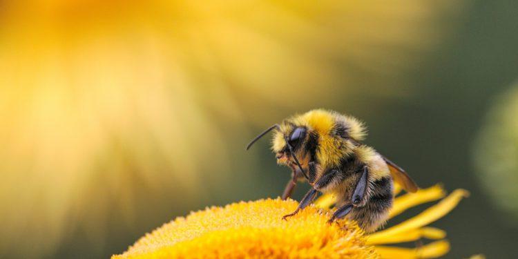 Startup israelí desarrolla colmena inteligente capaz de cuidar a millones de abejas