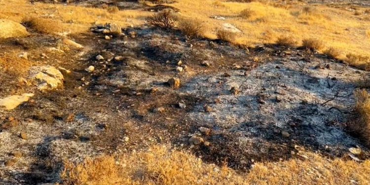 Activistas de B'Tselem detenidos por prender fuego cerca de Kiryat Arba