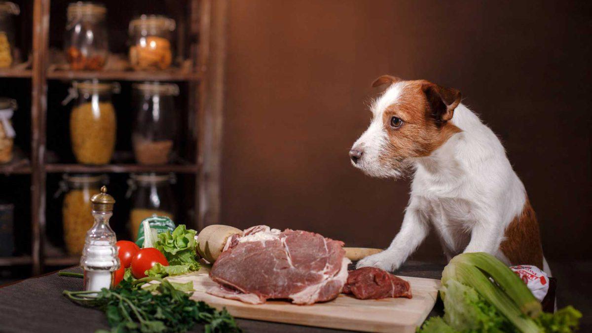 Los alimentos crudos para perros son un peligro de superbacterias, advierten los investigadores