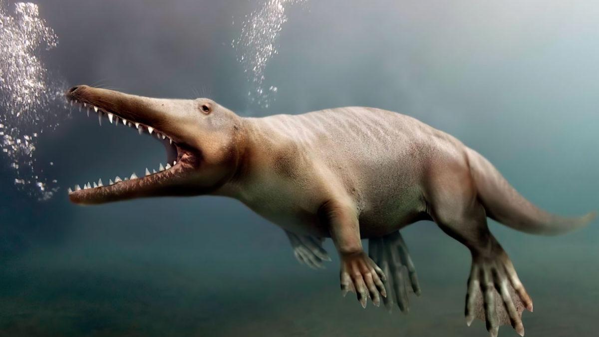 Hallan fósil de una ballena con patas de hace 43 millones de años