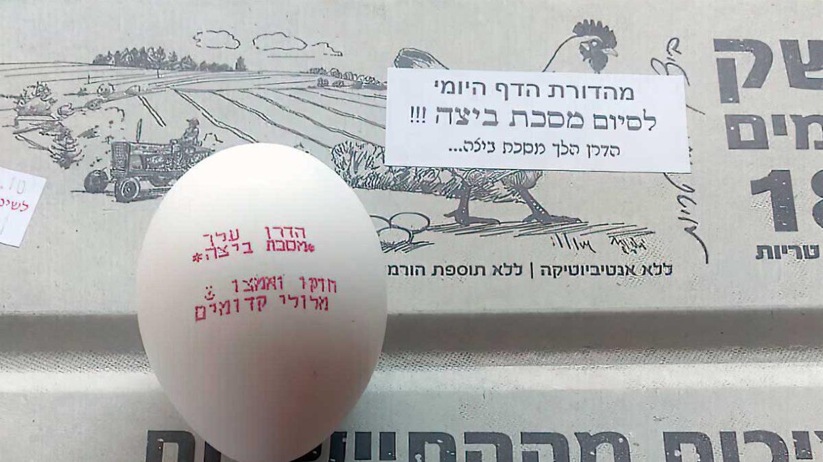 Granja de pollos se une al festejo de los estudiantes del Talmud